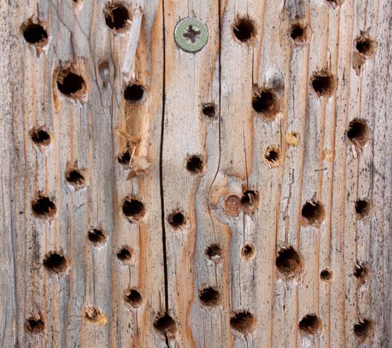 Prächtig Wildbienen: Untaugliche Nisthilfen #VP_53